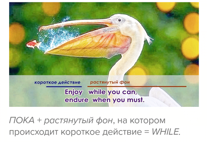пока while until